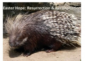 Easter hope Resurrection & Reconciliation - Porcupine
