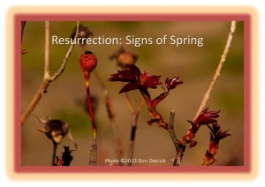Resurrection - Signs of Spring