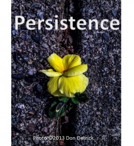 Persistence - pansy in concrete w copyright