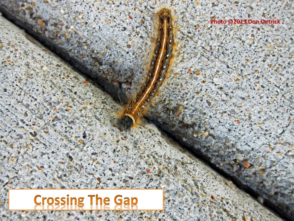 Crossing The Gap - Caterpillar